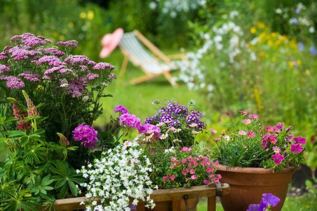 Fotolia Blumen im Vordergrund lila garten hintergrund