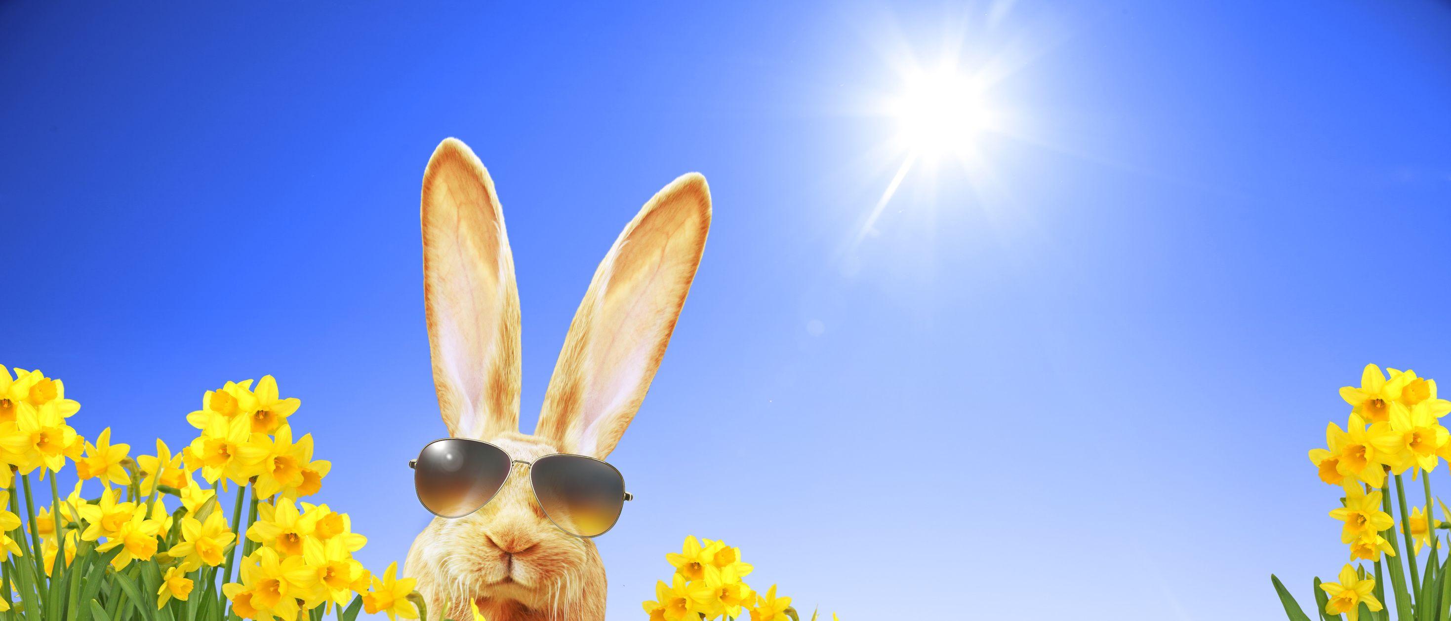 Ostern Osterhase Sonnenbrille Osterglocken